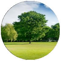 Drzewo oraz tereny zielone