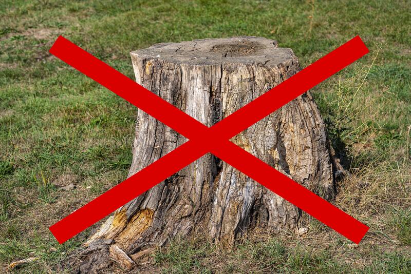 Usuwanie korzeni drzew